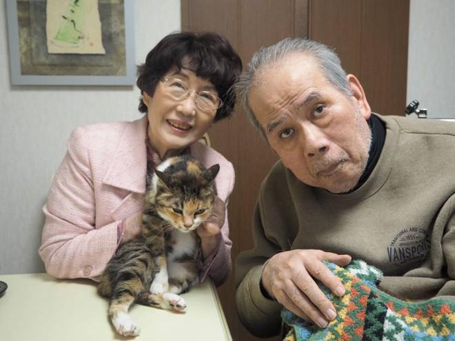 Bỏ cả nghìn đô để tìm mèo đi lạc và câu chuyện về nghề nghiệp đặc biệt chỉ có ở Nhật Bản - Ảnh 1.
