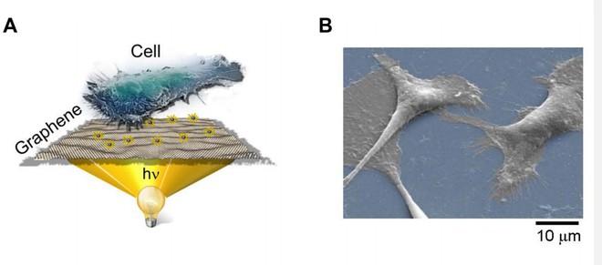 Mô hình đế graphene của Savtchenko và đồng nghiệp