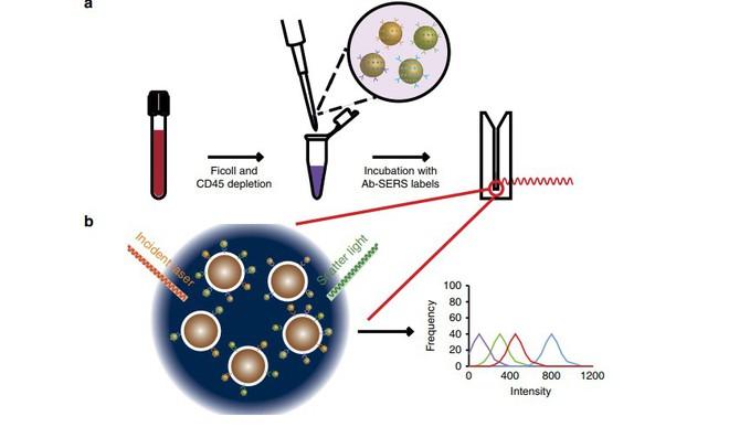 Sử dụng hạt vàng nano để theo dõi tế bào ung thư di căn