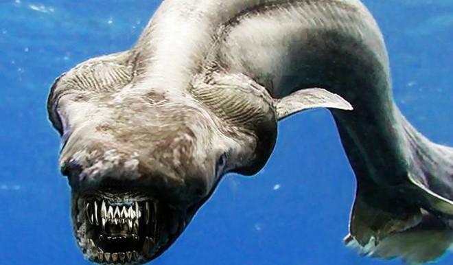 Đây là con cá mập với đầu rắn và 300 chiếc răng sắc nhọn mà bạn chỉ có thể gặp trong ác mộng - Ảnh 2.