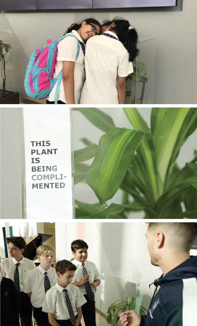IKEA kêu gọi học sinh mắng chửi chậu cây cả tháng trời, kết quả sẽ khiến bạn tròn mắt - Ảnh 5.