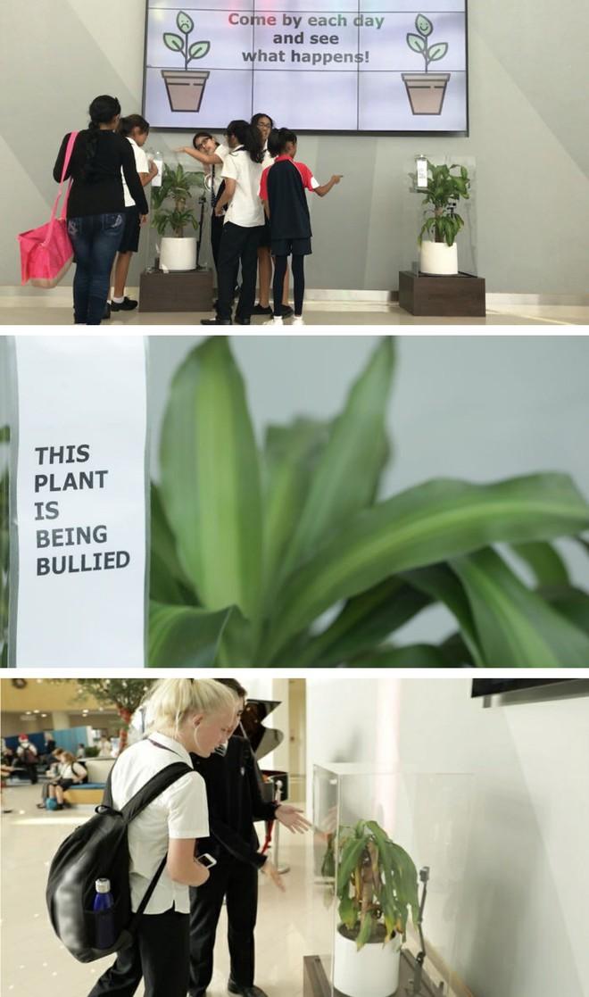 IKEA kêu gọi học sinh mắng chửi chậu cây cả tháng trời, kết quả sẽ khiến bạn tròn mắt - Ảnh 4.