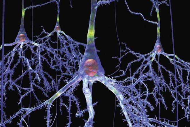 Bí mật đơn giản của sự thông minh: Tăng kích thước nơ-ron chúng ta sẽ tăng được IQ? - Ảnh 1.