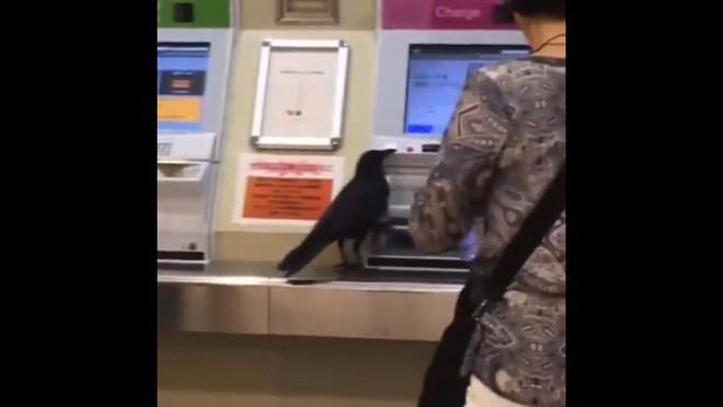 Không có tiền, con quạ ăn cắp thẻ tín dụng của hành khách để mua vé tàu - Ảnh 2.