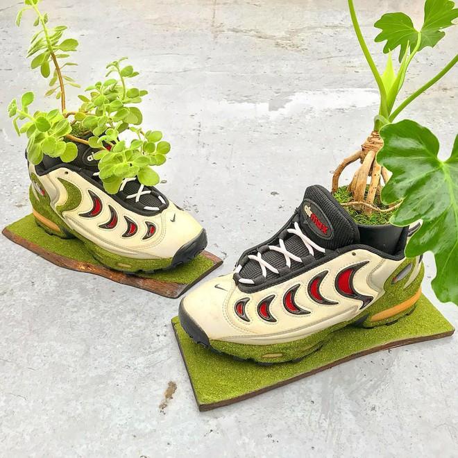 BST cây cảnh trồng trong giày khiến mọi sneakerhead phải suýt xoa ngưỡng mộ - Ảnh 1.