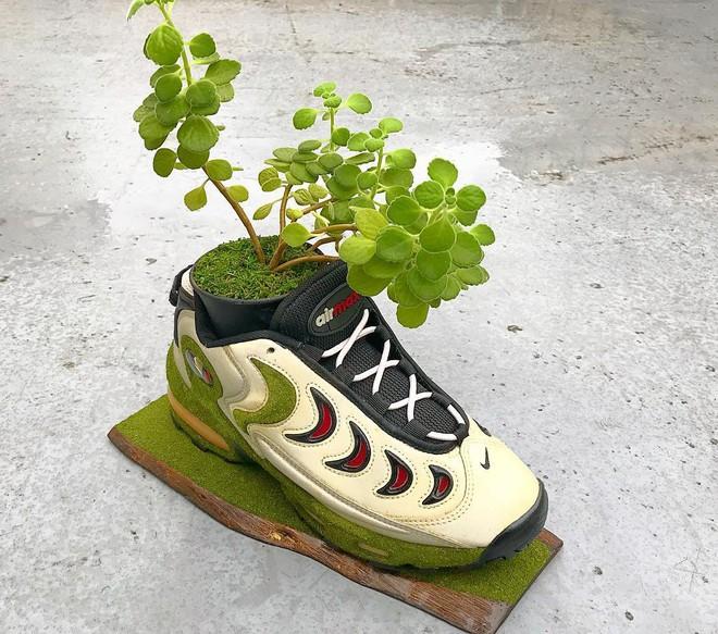 BST cây cảnh trồng trong giày khiến mọi sneakerhead phải suýt xoa ngưỡng mộ - Ảnh 2.