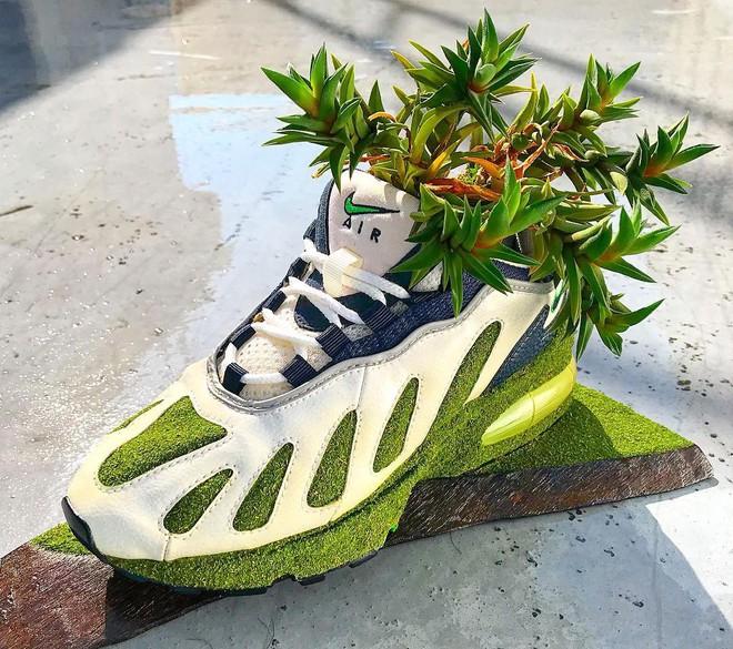 BST cây cảnh trồng trong giày khiến mọi sneakerhead phải suýt xoa ngưỡng mộ - Ảnh 4.