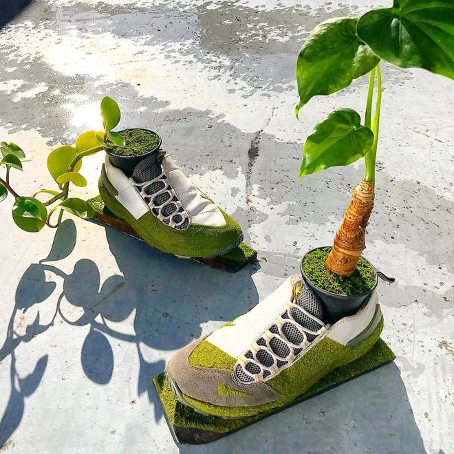 BST cây cảnh trồng trong giày khiến mọi sneakerhead phải suýt xoa ngưỡng mộ - Ảnh 5.