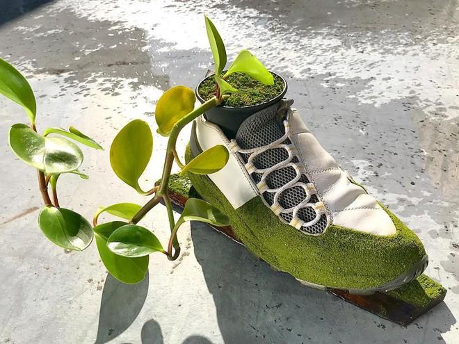 BST cây cảnh trồng trong giày khiến mọi sneakerhead phải suýt xoa ngưỡng mộ - Ảnh 6.