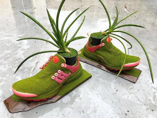 BST cây cảnh trồng trong giày khiến mọi sneakerhead phải suýt xoa ngưỡng mộ - Ảnh 7.