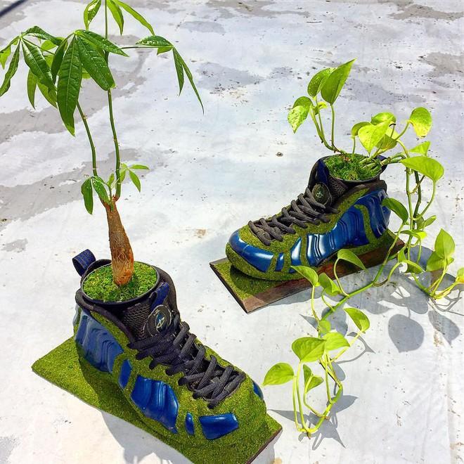 BST cây cảnh trồng trong giày khiến mọi sneakerhead phải suýt xoa ngưỡng mộ - Ảnh 9.