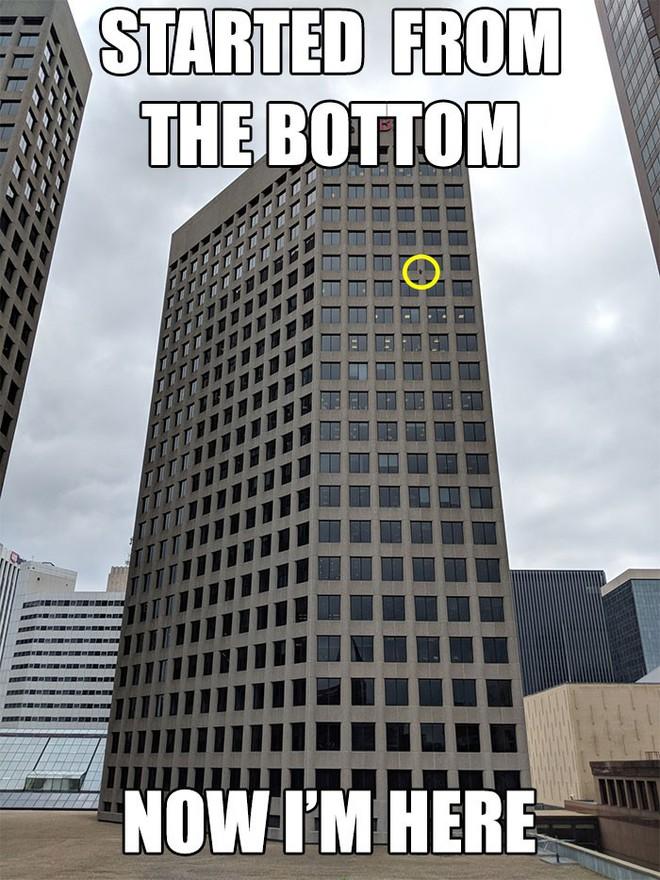 Internet nín thở dõi theo chú gấu mèo liều lĩnh leo lên tòa nhà chọc trời - Ảnh 6.