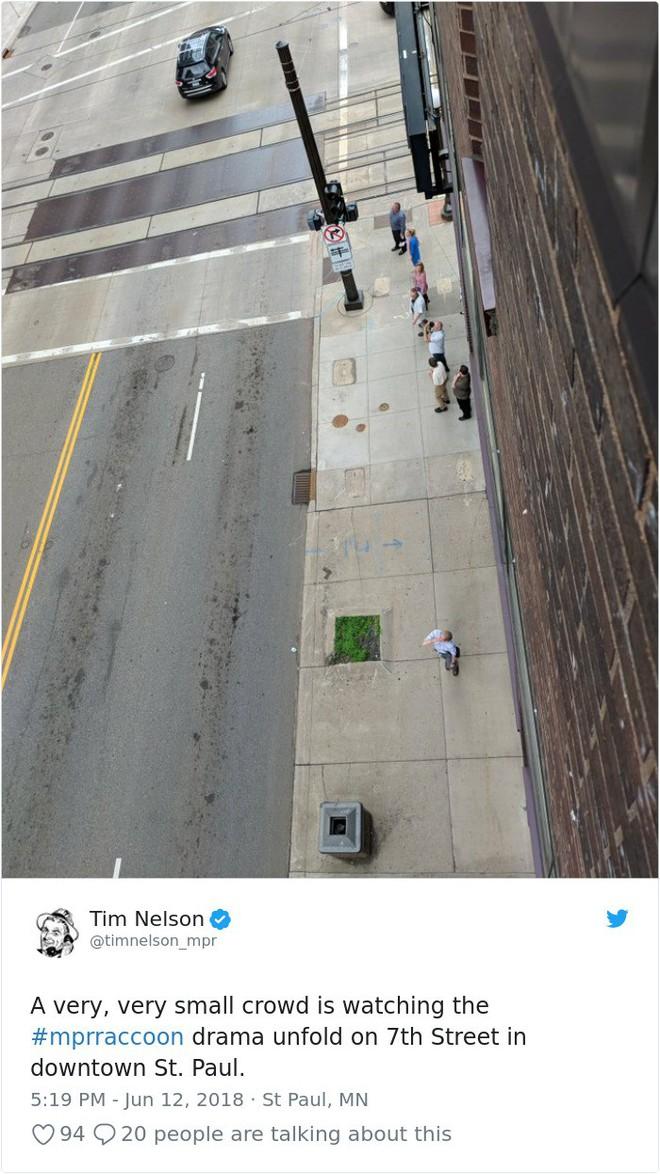 Internet nín thở dõi theo chú gấu mèo liều lĩnh leo lên tòa nhà chọc trời - Ảnh 7.