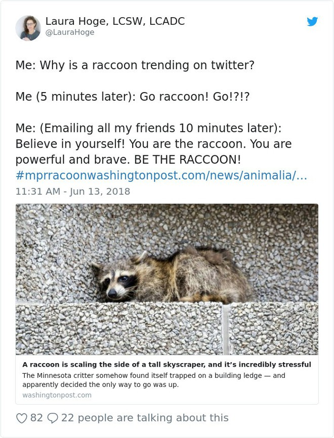 Internet nín thở dõi theo chú gấu mèo liều lĩnh leo lên tòa nhà chọc trời - Ảnh 10.