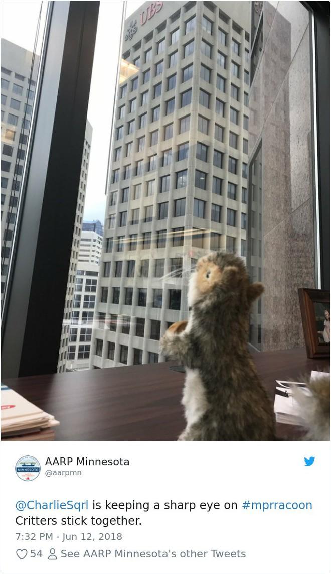Internet nín thở dõi theo chú gấu mèo liều lĩnh leo lên tòa nhà chọc trời - Ảnh 12.