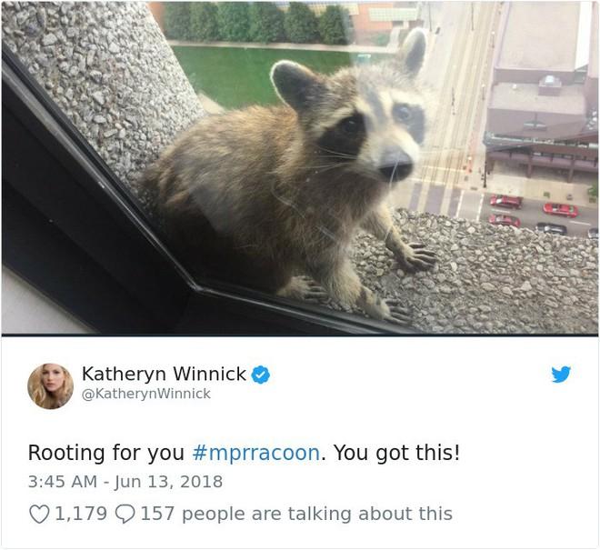 Internet nín thở dõi theo chú gấu mèo liều lĩnh leo lên tòa nhà chọc trời - Ảnh 17.