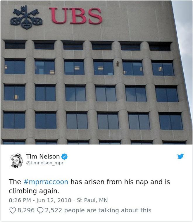 Internet nín thở dõi theo chú gấu mèo liều lĩnh leo lên tòa nhà chọc trời - Ảnh 18.