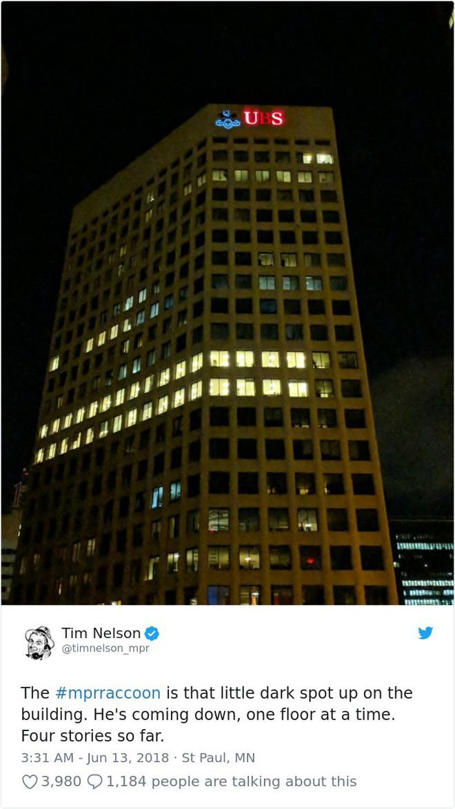 Internet nín thở dõi theo chú gấu mèo liều lĩnh leo lên tòa nhà chọc trời - Ảnh 19.