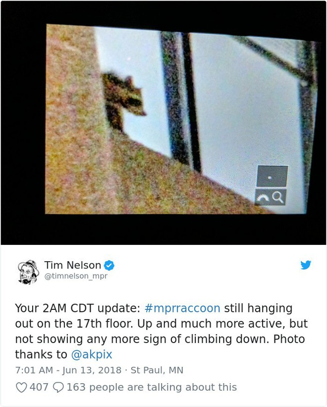 Internet nín thở dõi theo chú gấu mèo liều lĩnh leo lên tòa nhà chọc trời - Ảnh 20.