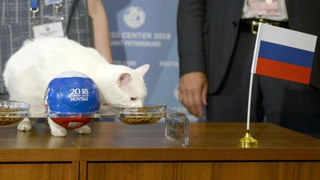 7 tiên tri động vật đã và đang gây sốt vì dự đoán đúng kết quả World Cup - Ảnh 2.