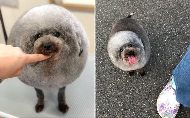 Hàng loạt chú chó bỗng hóa cừu sau khi tới làm đẹp ở salon thú kiểng Nhật Bản - Ảnh 2.
