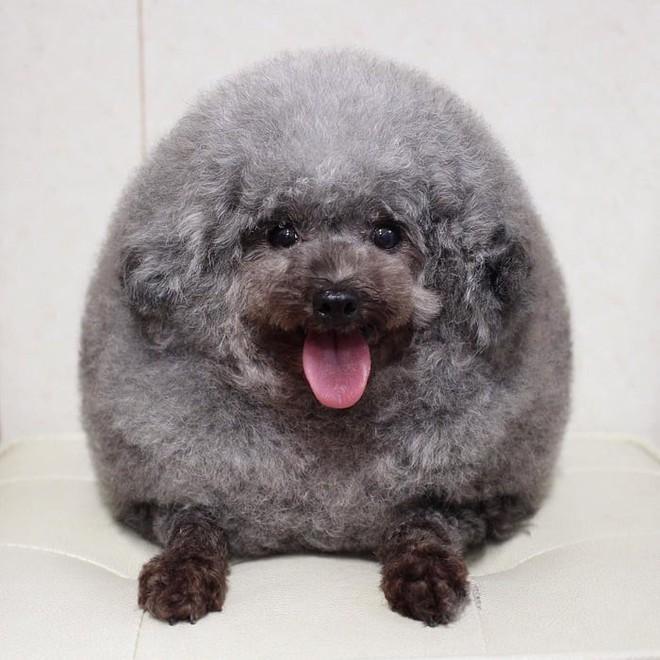 Hàng loạt chú chó bỗng hóa cừu sau khi tới làm đẹp ở salon thú kiểng Nhật Bản - Ảnh 4.