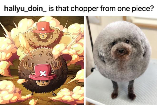 Hàng loạt chú chó bỗng hóa cừu sau khi tới làm đẹp ở salon thú kiểng Nhật Bản - Ảnh 9.
