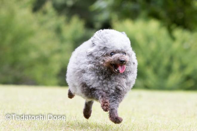 Hàng loạt chú chó bỗng hóa cừu sau khi tới làm đẹp ở salon thú kiểng Nhật Bản - Ảnh 11.