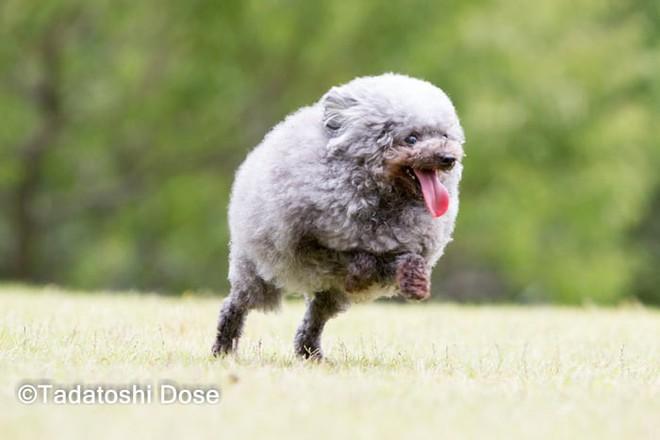 Hàng loạt chú chó bỗng hóa cừu sau khi tới làm đẹp ở salon thú kiểng Nhật Bản - Ảnh 13.