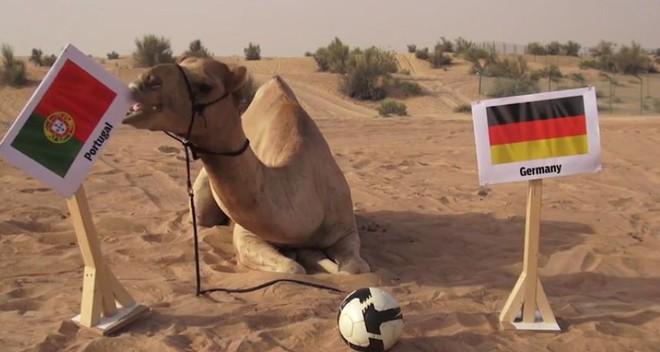 7 tiên tri động vật đã và đang gây sốt vì dự đoán đúng kết quả World Cup - Ảnh 3.