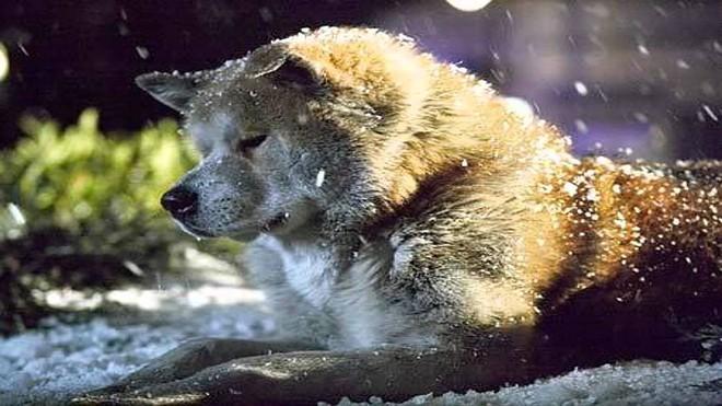 """""""Hachi: A Dog's Tale"""": Một chú chó có thể dạy bạn những gì, về tình yêu? - Ảnh 6."""