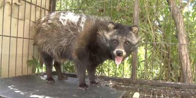 Ông chú tưởng bở mua được chó Phốc sóc với giá 1 triệu, 8 tháng sau mới phát hiện ra đó là gấu mèo - Ảnh 4.