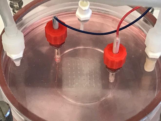 Bước tiến mới của in 3D sinh học: tạo ra cả mảng mô tim người có khả năng cấy ghép - Ảnh 1.