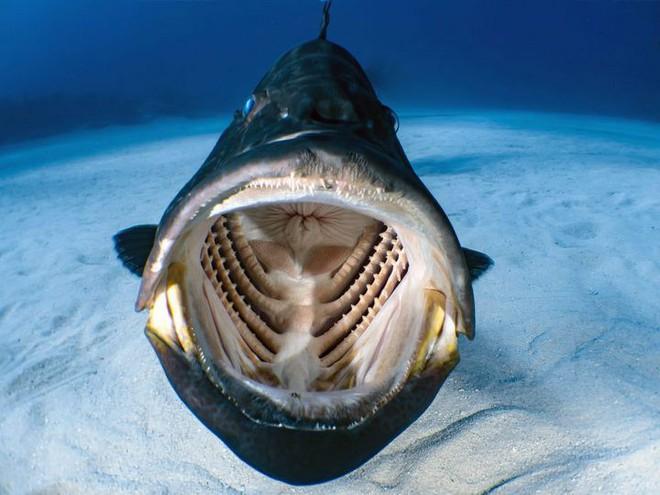 Chàng thợ lặn may mắn chộp được khoảnh khắc bên trong miệng một con cá lúc đang bơi - Ảnh 1.