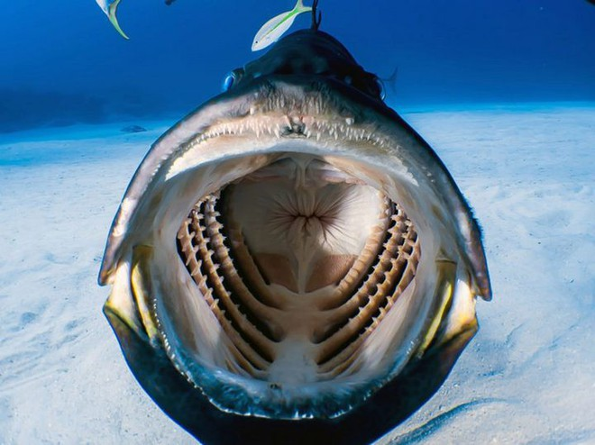Chàng thợ lặn may mắn chộp được khoảnh khắc bên trong miệng một con cá lúc đang bơi - Ảnh 2.