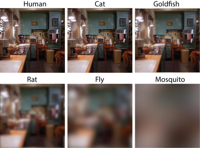 Thế giới dưới mắt của các loài khác nhau: mắt con người nhìn cực kì sắc nét, hóa ra ruồi muỗi cận nặng, chẳng nhìn thấy cái gì cả - Ảnh 1.