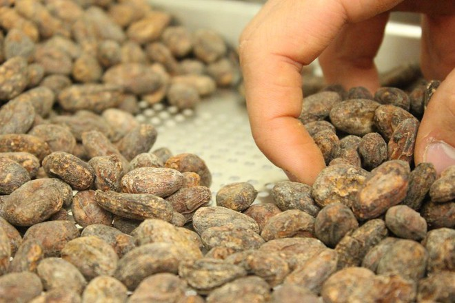Hành trình biến hạt ca cao thành món chocolate vạn người mê qua lời kể của người thợ lành nghề - Ảnh 12.