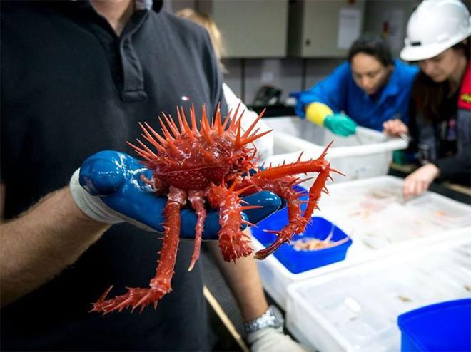 Ở độ sâu gần 5000m, đại dương ẩn chứa những sinh vật như bước ra từ phim kinh dị - Ảnh 1.