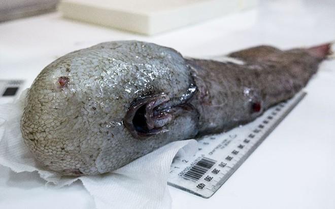 Ở độ sâu gần 5000m, đại dương ẩn chứa những sinh vật như bước ra từ phim kinh dị - Ảnh 7.