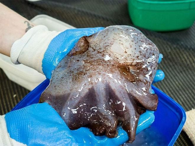 Ở độ sâu gần 5000m, đại dương ẩn chứa những sinh vật như bước ra từ phim kinh dị - Ảnh 9.