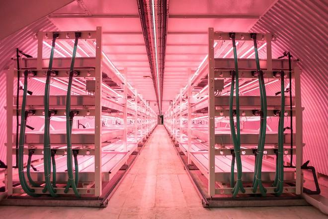Trung Quốc: Nông trại công nghệ cao rộng 5000m2, sản lượng 8 - 10 tấn/ngày nhưng chỉ cần 4 nhân viên vận hành - Ảnh 2.