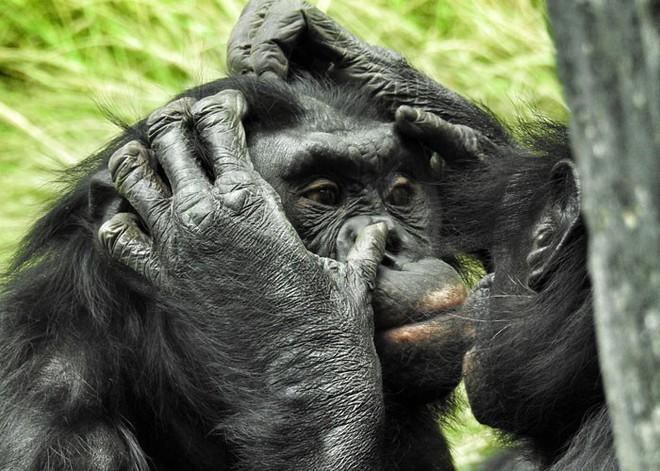 10 sự thật thú vị về động vật hoang dã mà chúng ta không được dạy hồi còn đi học - Ảnh 7.