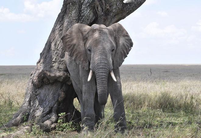 10 sự thật thú vị về động vật hoang dã mà chúng ta không được dạy hồi còn đi học - Ảnh 2.