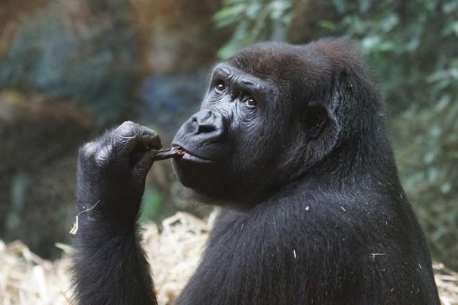 10 sự thật thú vị về động vật hoang dã mà chúng ta không được dạy hồi còn đi học - Ảnh 8.