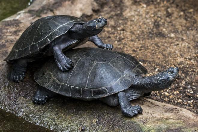 10 sự thật thú vị về động vật hoang dã mà chúng ta không được dạy hồi còn đi học - Ảnh 9.