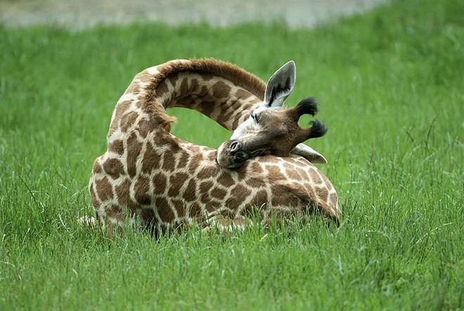 10 sự thật thú vị về động vật hoang dã mà chúng ta không được dạy hồi còn đi học - Ảnh 10.