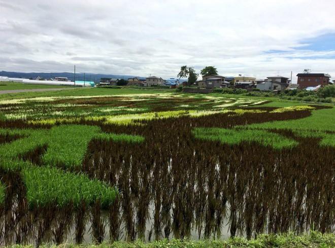 Có một cánh đồng lúa đặc biệt chuyên tạo ra các nhân vật hoạt hình nổi tiếng ở Nhật Bản - Ảnh 3.