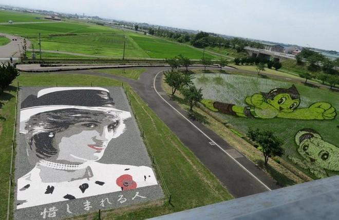 Có một cánh đồng lúa đặc biệt chuyên tạo ra các nhân vật hoạt hình nổi tiếng ở Nhật Bản - Ảnh 4.