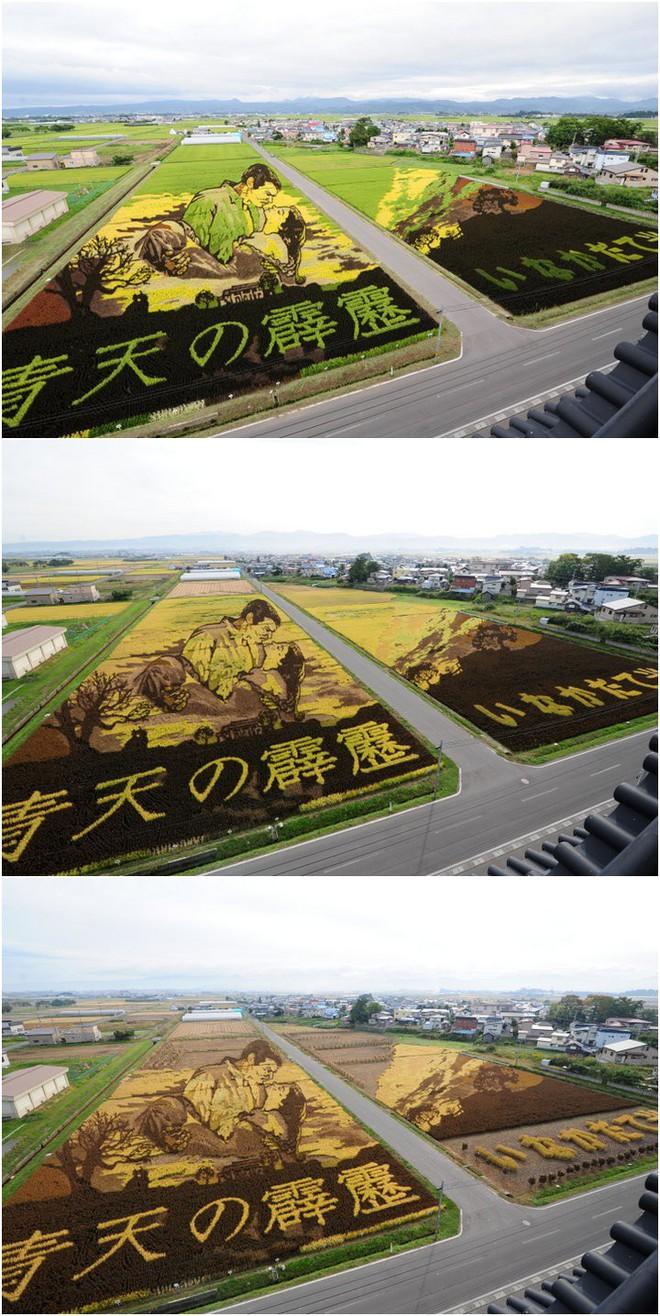 Có một cánh đồng lúa đặc biệt chuyên tạo ra các nhân vật hoạt hình nổi tiếng ở Nhật Bản - Ảnh 6.