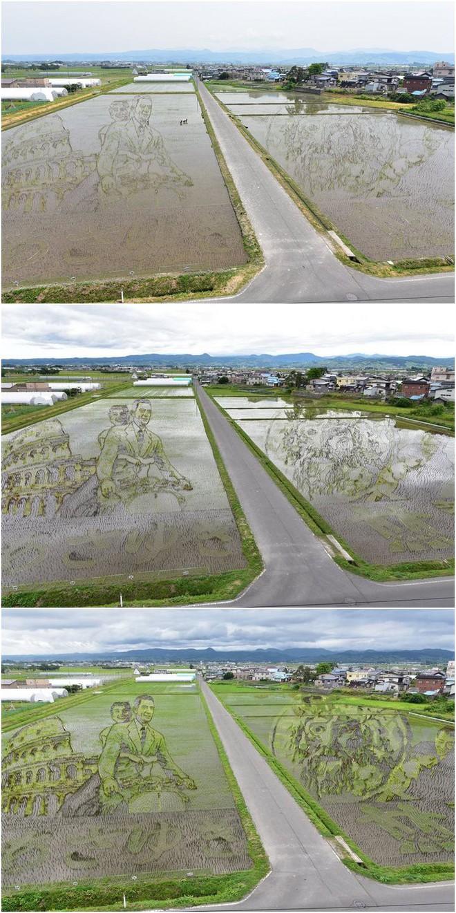Có một cánh đồng lúa đặc biệt chuyên tạo ra các nhân vật hoạt hình nổi tiếng ở Nhật Bản - Ảnh 7.